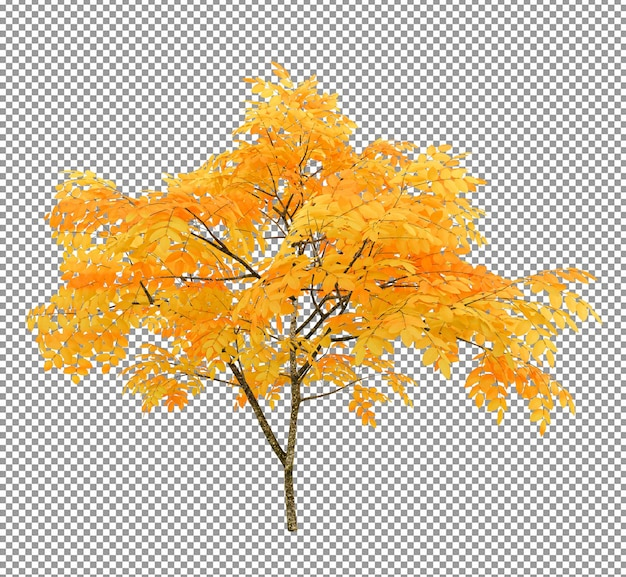 Beautiful tree with rich foliageforeground isolated