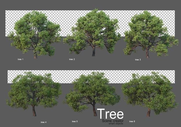 Beautiful variety of big trees rendering