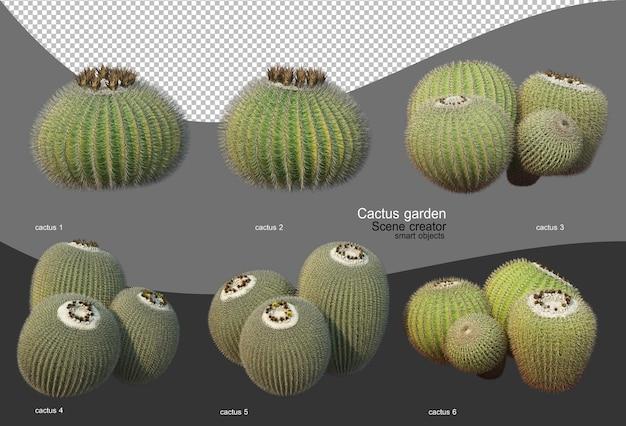 Beautiful variety of cactus garden
