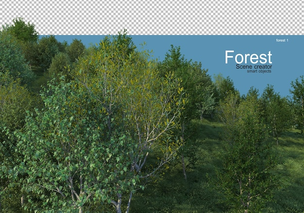 Beautiful variety of forest layouts