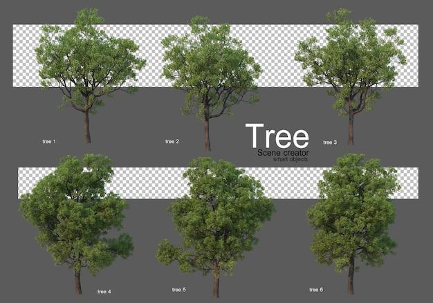 아름다운 다양한 큰 나무 렌더링