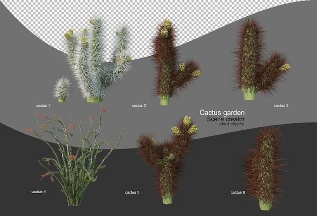 다양한 선인장 정원