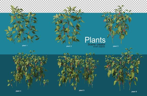 さまざまなスタイルの美しいさまざまな作物