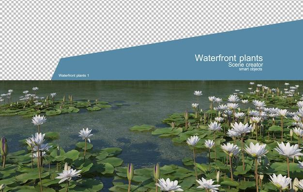 아름다운 다양한 수변 식물