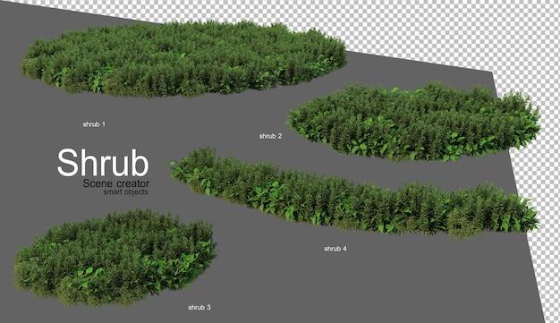 Beautiful variety of shrubs rendering