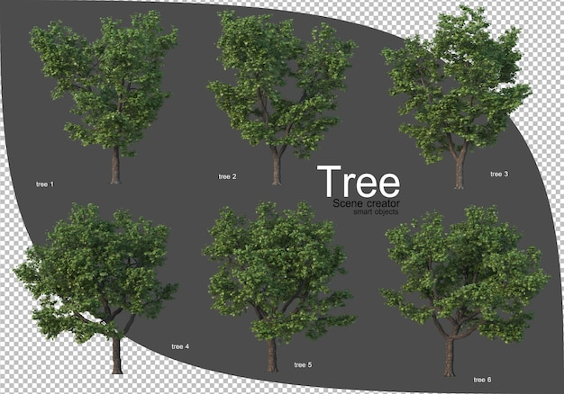Beautiful variety of trees rendering