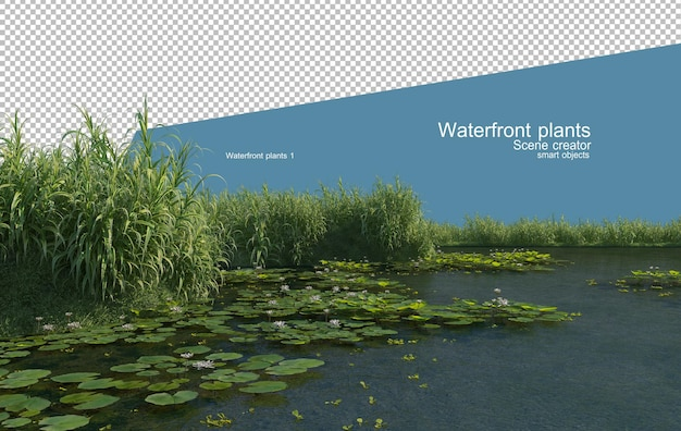 Beautiful variety of waterfront plants