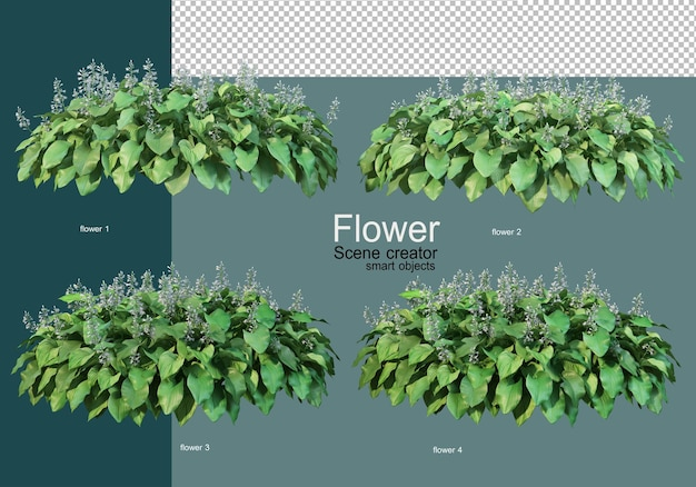 Beautiful various kinds of flowers