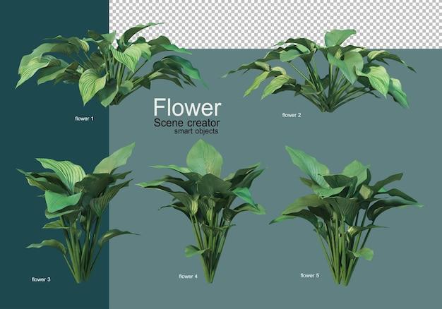 아름다운 다양한 종류의 꽃