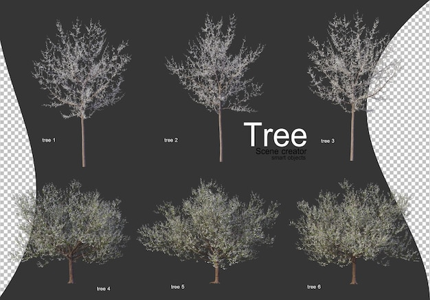 고립 된 나무의 아름 다운 다양 한 유형