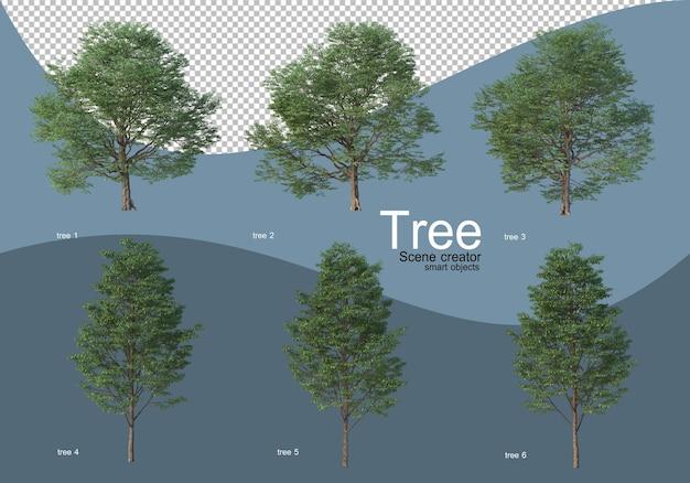 아름다운 다양한 종류의 나무