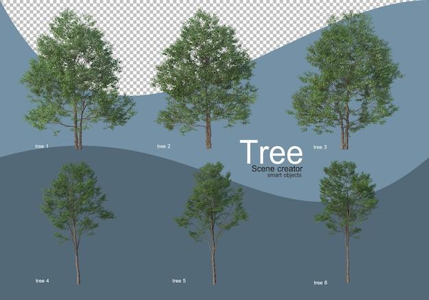 美しい様々な種類の木