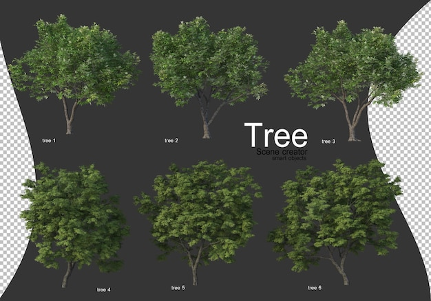 Beautiful various types of trees isolated