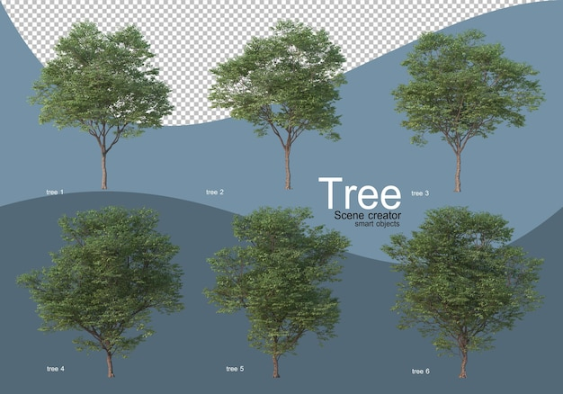 Beautiful various types of trees