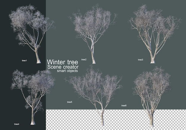 Beautiful various winter trees isolated
