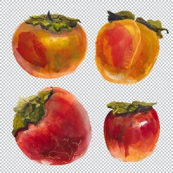 Ботаническая акварель иллюстрации. свежие плоды хурмы