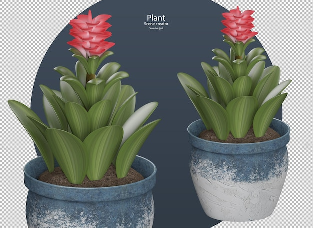 Bromelia plant in pot red flower in pot indoor plant in 3d rendering isolated