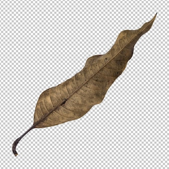 Brown dry leaf isolated rendering
