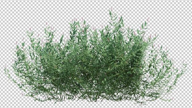 分離されたブラシツリー