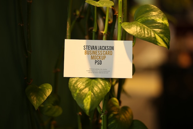 Business card on leaf mockup psd