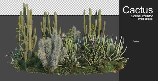 Cactus garden small variety