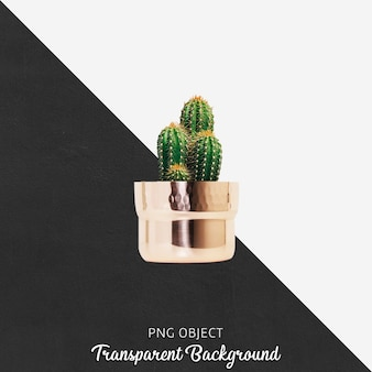 透明の金の植木鉢のサボテン