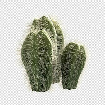 分離されたサボテン植物