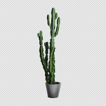 Cactus over white background