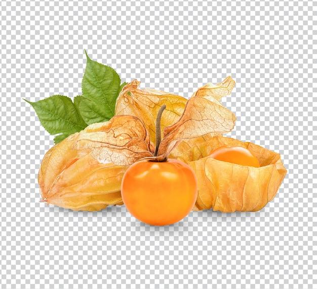 ケープグーズベリー、葉が分離されたサイサリスプレミアムpsd