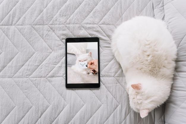 소파에 고양이 및 태블릿 이랑