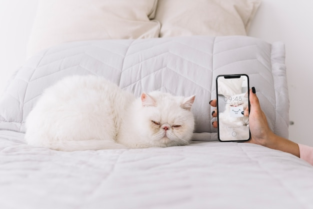 Cat and smartphone mockup on couch