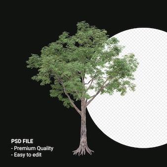 Celtis laevigata 또는 sugarberry 나무 3d 렌더링 투명 배경에 고립