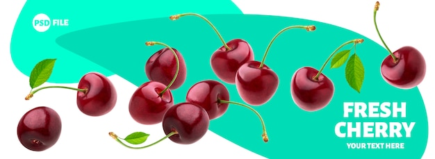Cherries with stems and leaves isolated on white banner