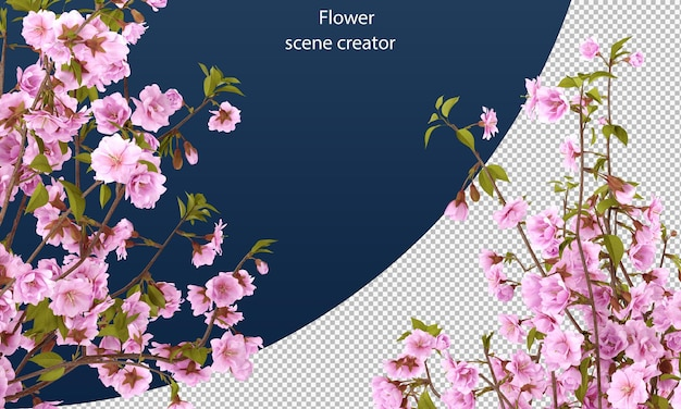 Cherry flower clipping path isolated cherry flower