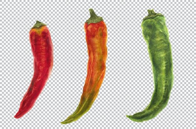Перец чили. акварельные ботанические иллюстрации трех фруктов острого перца
