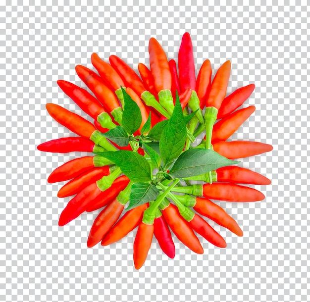 고립 된 잎이 있는 칠리 페 퍼 premium psd
