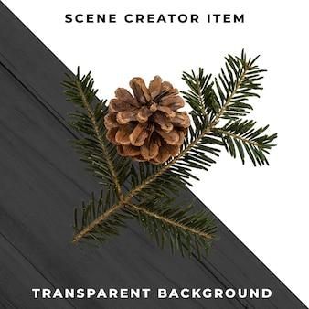 Ветвь рождественской елки изолированная с путем клиппирования.