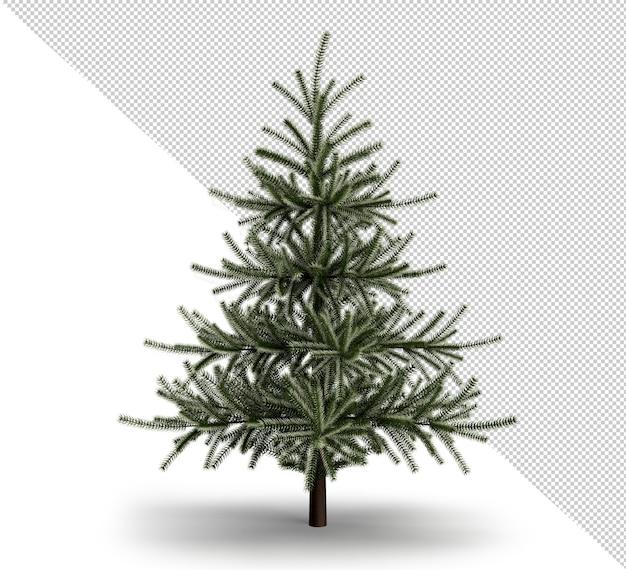 Christmas tree isolated