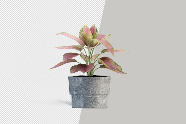 Close up on flower in pot interior 3d rendering