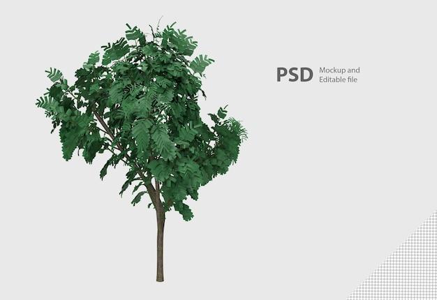 隔離された植物のクローズアップ