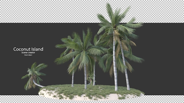 Coconut tree in 3d rendering isolated on island
