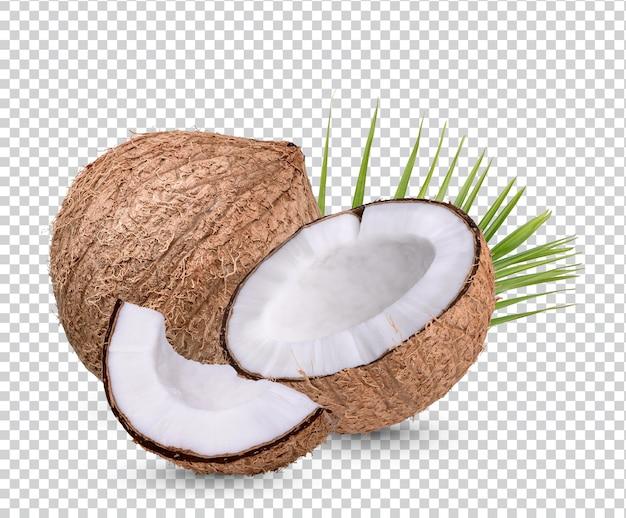 코코넛 잎 격리 프리미엄 psd