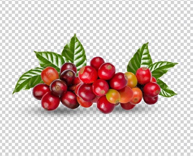 Кофейные зерна с листьями изолированы premium psd