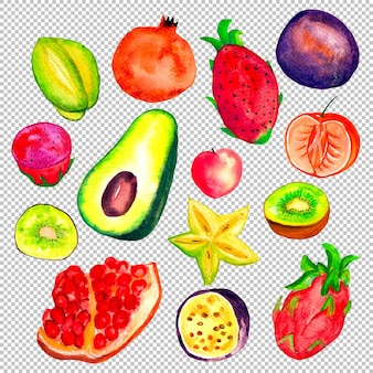 Collection of tropical fruits in watercolor