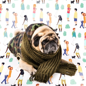 Cute dog covered with winter clothing