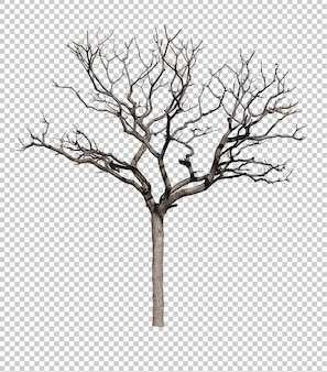白い背景に隔離された葉なしの暗い木