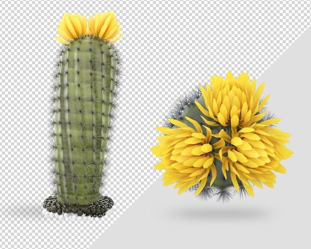 3d 렌더링 디자인에 장식 선인장 꽃