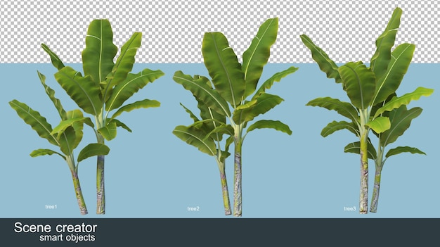 Different types of banana tree 3d rendering