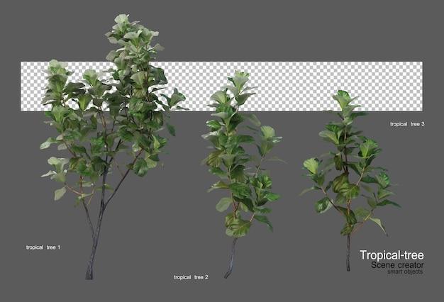 さまざまな種類の熱帯の木