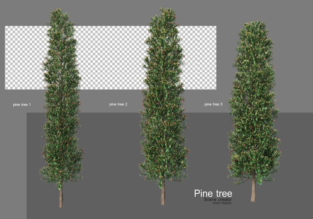 Different types of pine trees